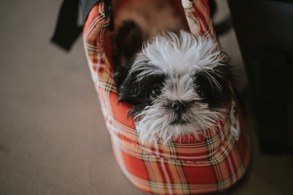 Great Gift Ideas For Pet-Friendly Households